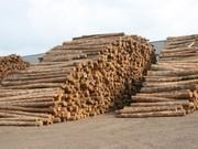 собственный лес и лесоматериалы с Украины.